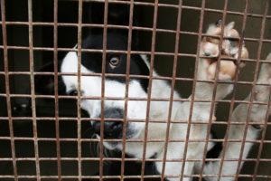 fondation brigitte bardot editorial abandons été chiens chats euthanasie 2018