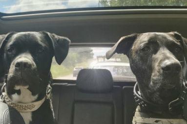 Départ en vacances : Comment bien voyager avec son animal de compagnie en voiture ?