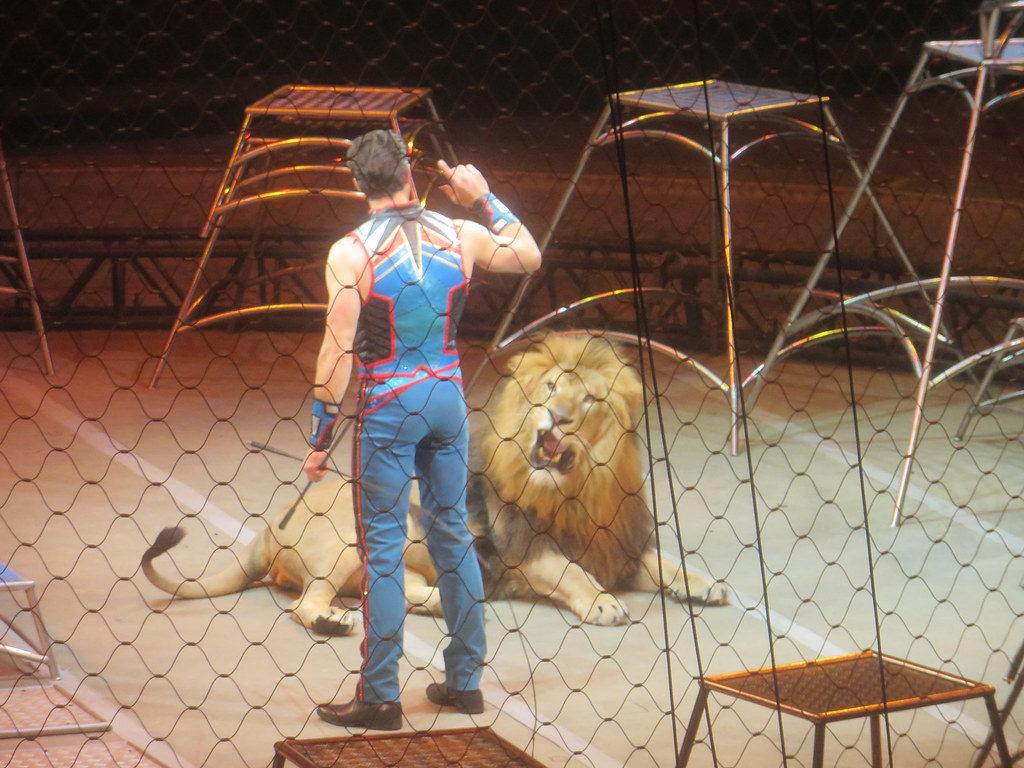 fondation brigitte bardot cirque sans animaux lion cage spectacle