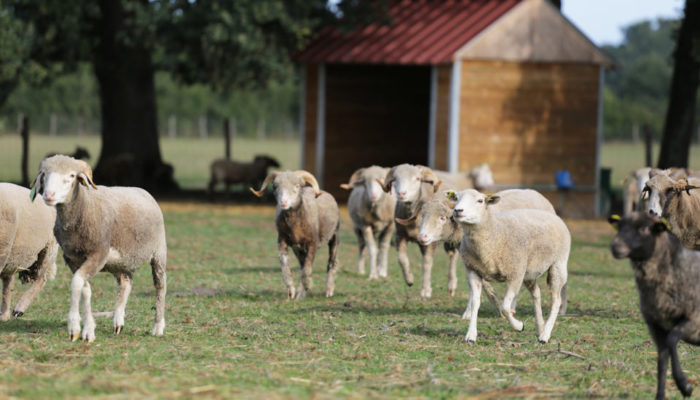 fondation brigitte bardot refuge montpon animaux