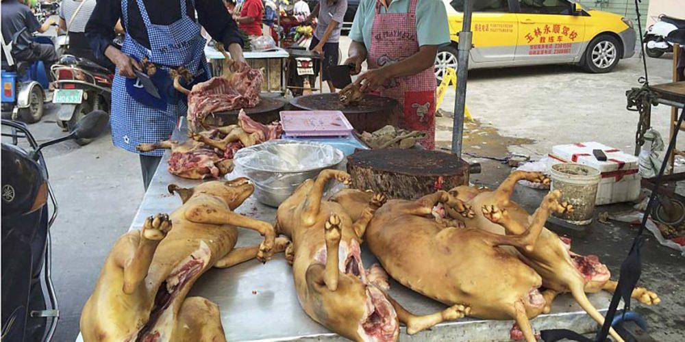 Non au Festival de la viande de chien de Yulin !