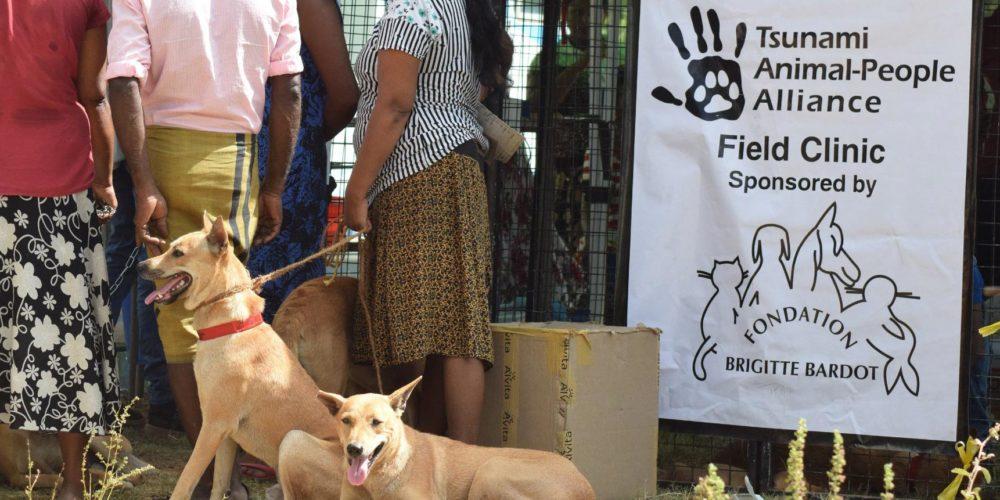 Au Sri Lanka, la FBB soutient Tsunami Animal depuis 2008