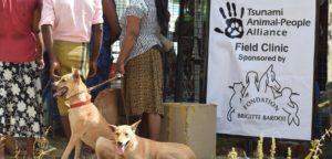 La FBB soutient l'association Tsunami Animal-People Alliance depuis 2008