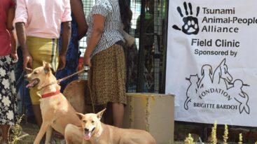 Au Sri Lanka, la FBB soutient Tsunami Animal depuis 2007