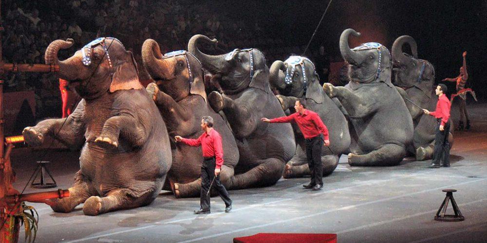 Signez notre pétition pour un cirque sans animaux !