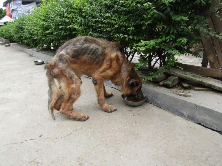 chine consommation viande de chien abattoir chiens