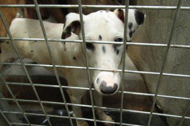 Yulin : stop à la viande de chien !