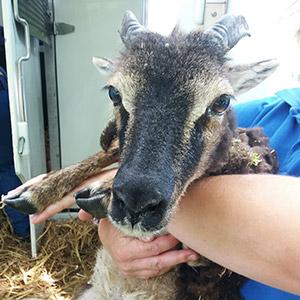fondation brigitte bardot sauvetage 60 animaux seine-et-marne