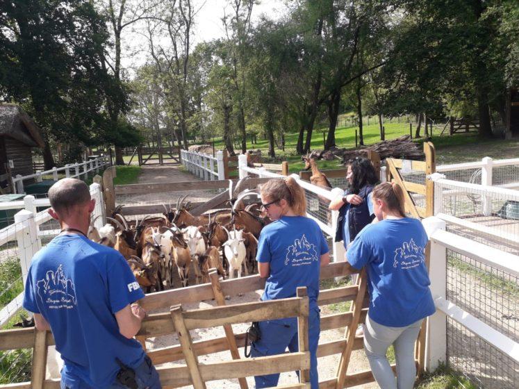 fob prise en charge cheptel de 70 chèvres dans l'allier