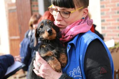 Élevage non déclaré : la FBB prend en charge 21 chiens