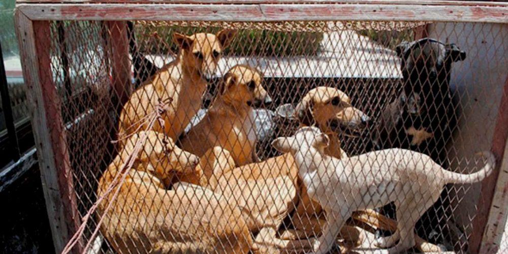 Algérie : lettre de Brigitte Bardot au Président Abdelmadjid Tebboune pour dénoncer et demander l'arrêt des atroces électrocutions de chiens et chats et les tueries au fusil