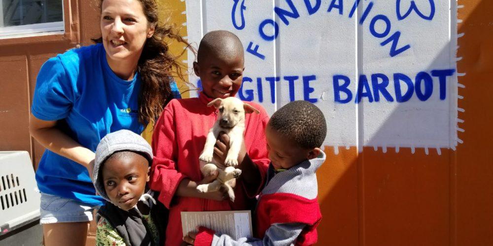 Afrique du Sud : 18 000 chiens stérilisés depuis 2008 !