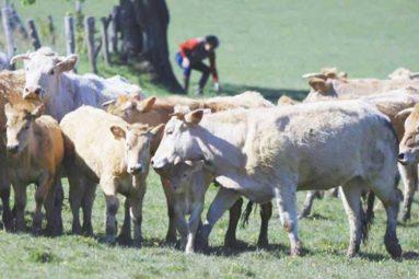 La FBB prend en charge des bovins en souffrance sur une exploitation agricole de Mayenne