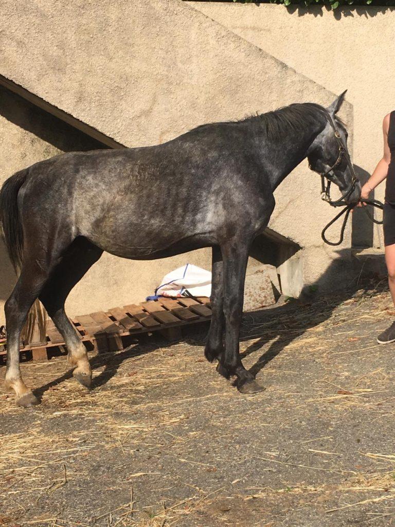 fondation brigitte bardot sauvetage chevaux centre equestre ardeche