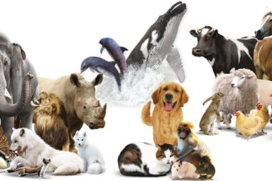 Toulon : la FBB parraine un colloque universitaire sur «La personnalité juridique de l'animal»