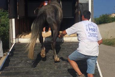Sauvetage de 6 chevaux en manque de soins dans l'Ardèche