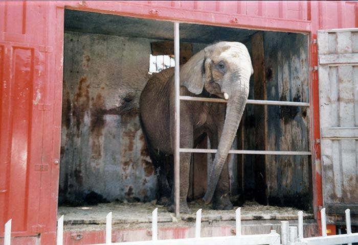 fondation brigitte bardot cirque sans animaux action