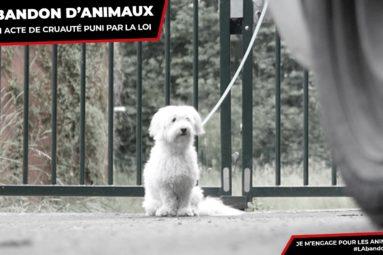 Découvrez notre campagne contre l'abandon des animaux en été !