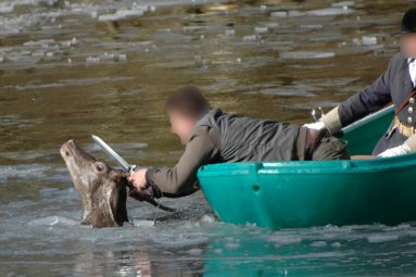 Fête du chien (et de la chasse) : Brigitte Bardot interpelle le Maire
