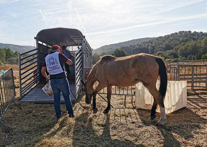 La FBB sauve des équidés en état de souffrance dans les Bouches-du-Rhône