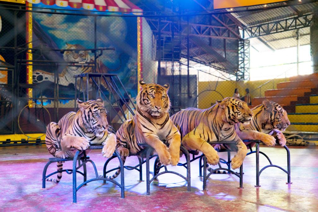 fbb action pour un cirque sans animaux