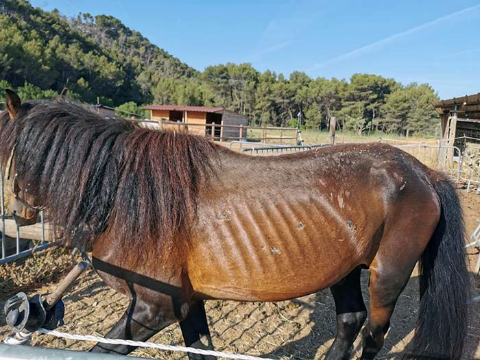 fbb sauvetage chevaux mouton bouches-du-rhone