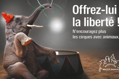 Lancement de notre campagne pour des cirques sans animaux !