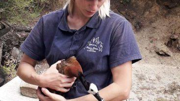 Opération sauvetage de 60 animaux en Seine-et-Marne