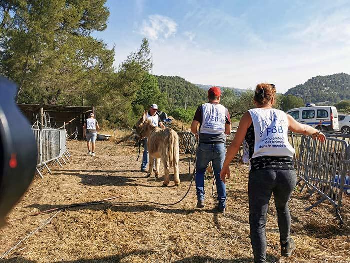fondation brigitte bardot sauvetage chevaux mouton bouches-du-rhone
