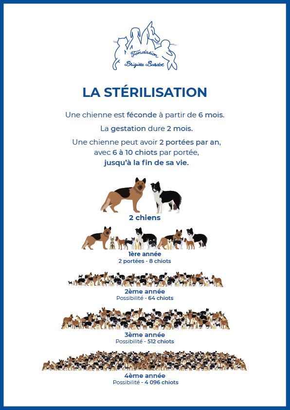 fondation brigitte bardot sterilisation chiens chats