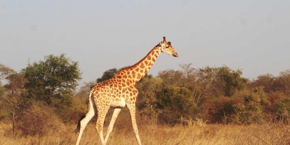 Conférence mondiale de la vie sauvage : des avancées pour les animaux !