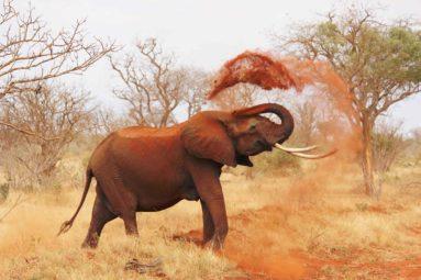 Des nouvelles prometteuses pour les éléphants d'Afrique !