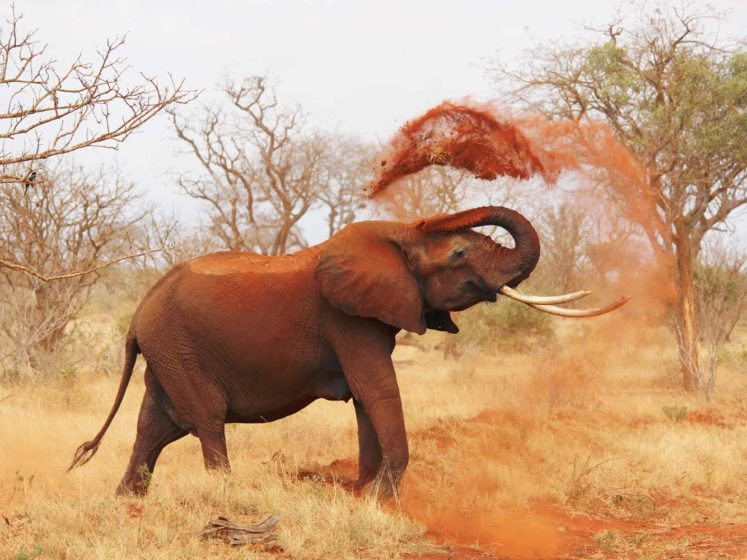 Fondation Brigitte Bardot CITES commerce international éléphants