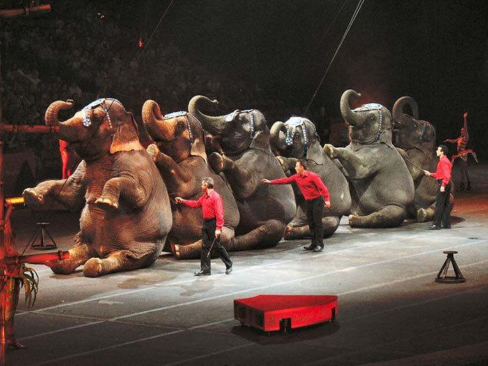 fondation brigitte bardot cirques sans animaux