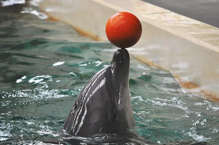 fondation brigitte bardot delphinarium captivite dauphins orques cetaces