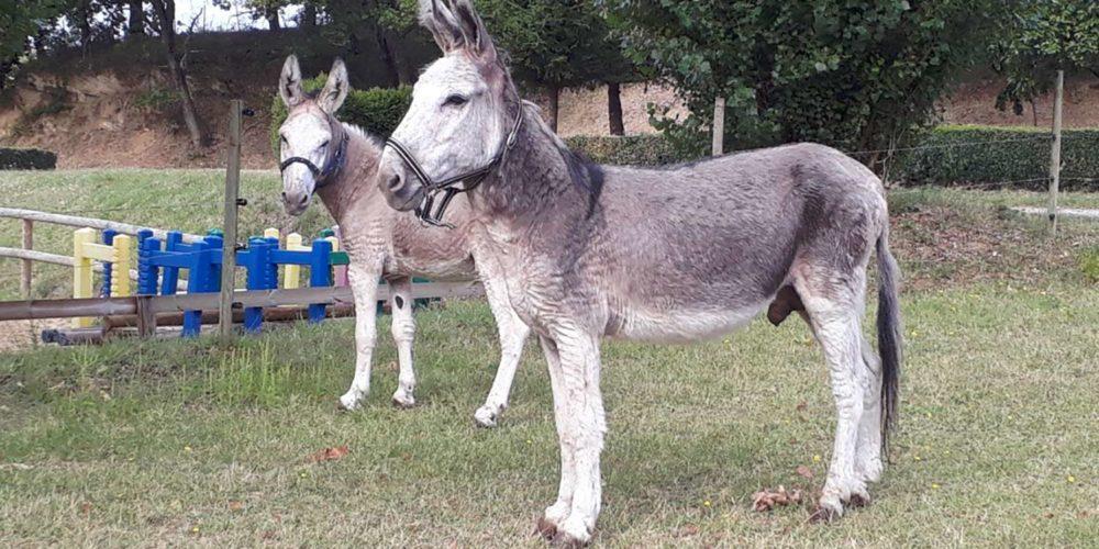 Drôme : la FBB sauve et recueille deux ânes maltraités