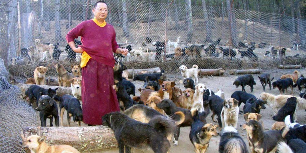 Au Bhoutan, la FBB aide des associations à sauver des centaines d'animaux depuis 2009