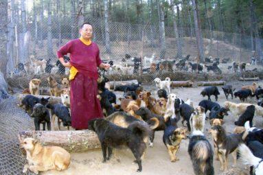 Au Bhoutan, l'aide de la Fondation a permis de sauver des centaines d'animaux