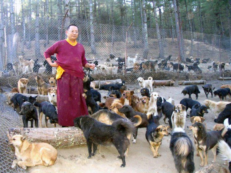 ondation brigitte bardot aide association bhoutan asie