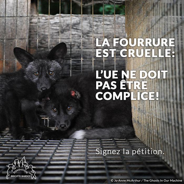 fondation brigitte bardot fourrure campagne europe