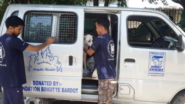 En Inde, la FBB participe à la stérilisation des chiens errants depuis 2008
