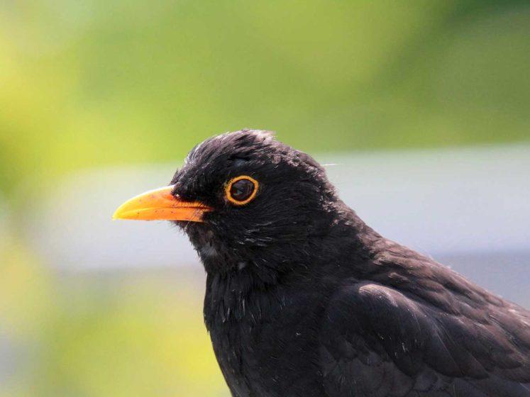 fondation brigitte bardot ministre ecologie arretes chasses traditionnelles oiseaux