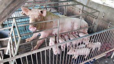 Stop à l'élevage en cage : signez l'initiative citoyenne européenne !