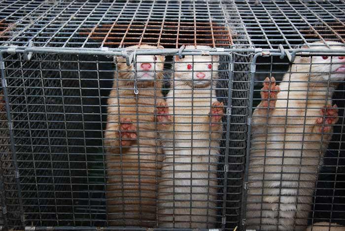 californie interdiction fourrure animaux sauvages 2023