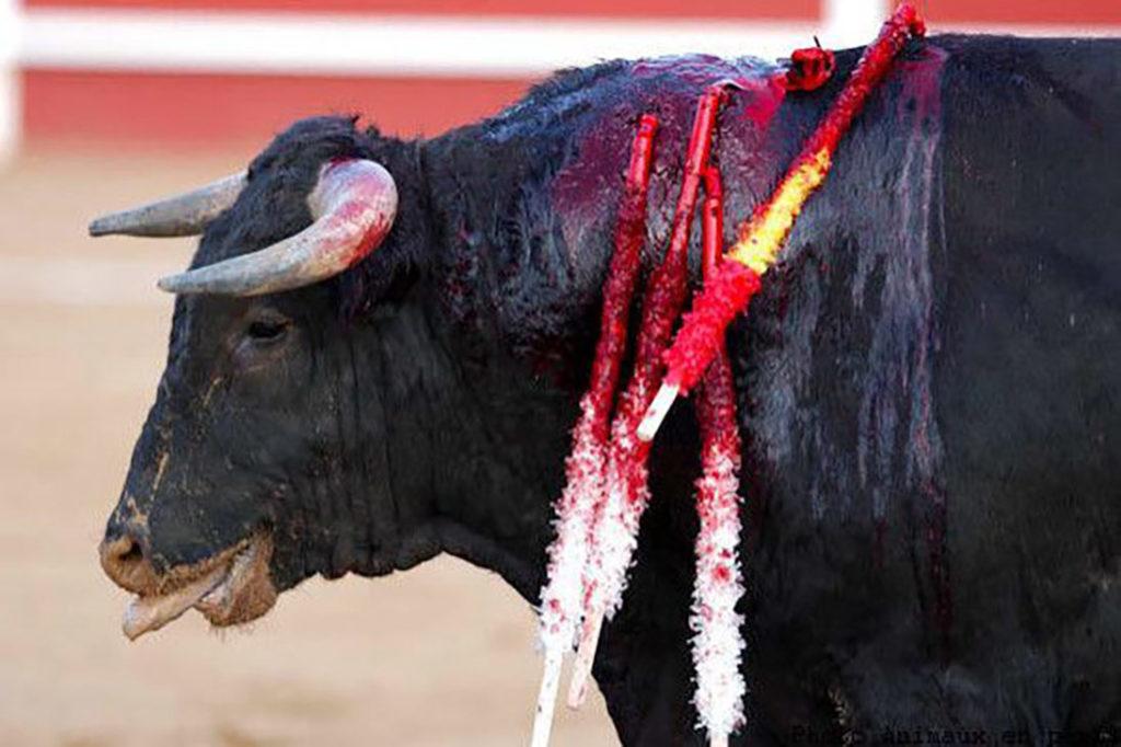 proposition de loi samantha cazebonne interdiction corrida mineurs
