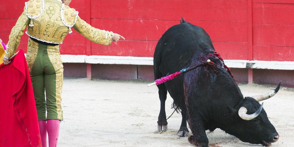 Cruauté sur animaux : les mineurs bientôt interdits de corrida en France ?