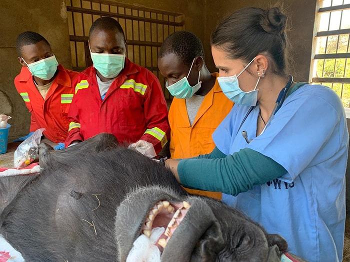 fondation bardot aide internationale afrique pasa primates