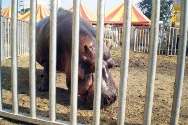 Paris veut la fin des animaux sauvages dans les cirques !