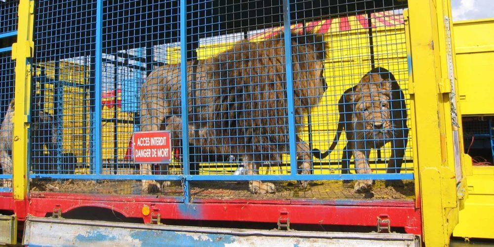 La France doit interdire les animaux sauvages dans les cirques !