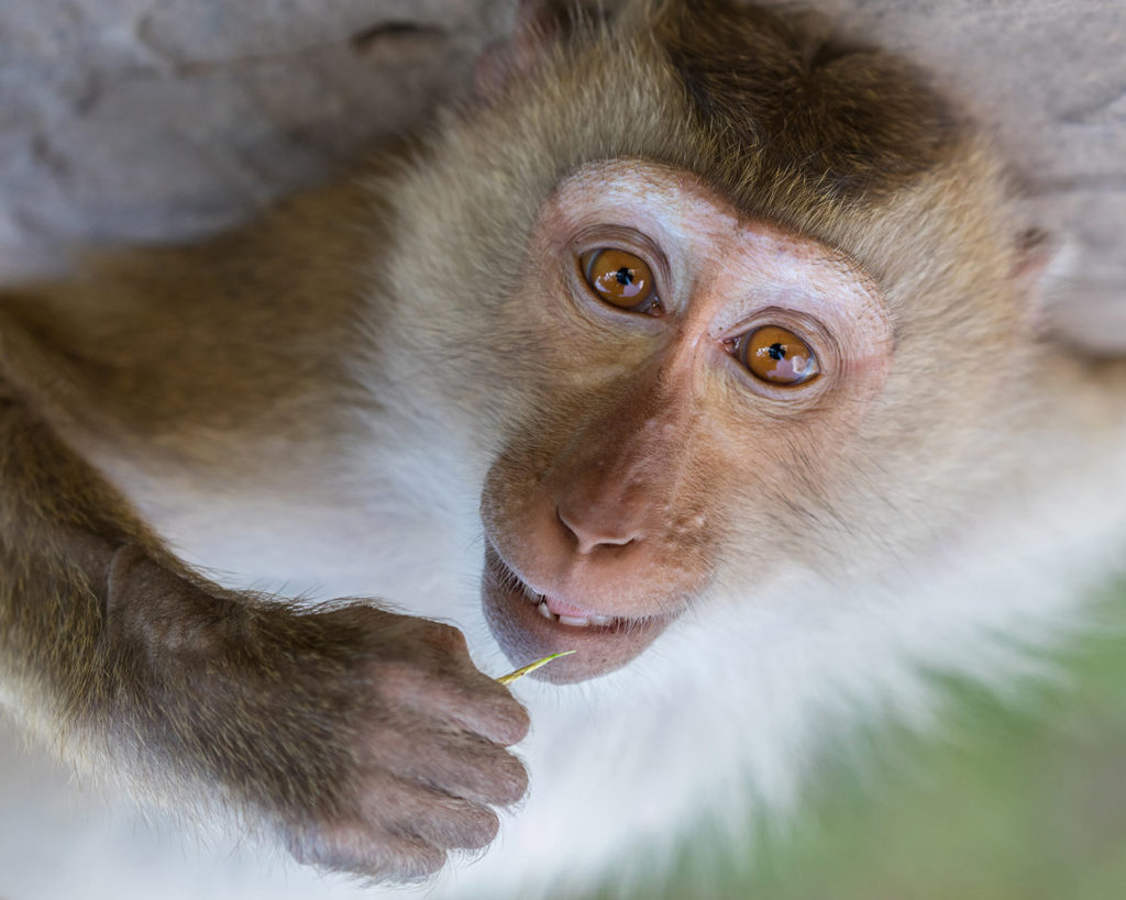 fondation brigitte bardot sauvetage macaque labenne